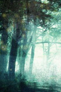 검은 숲의 마녀