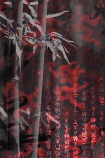 흑백의 꽃