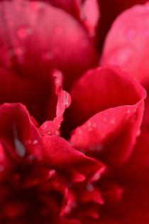 짐승이 꺾은 꽃