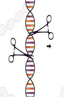 크리스퍼유전자가위(CRISPR cas9)